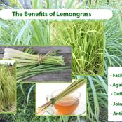The benefits of lemongrass on health