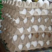 U/W: Price of Eggs Drop in Wa