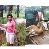 Igbos Can Also Rear Cow; See Pictures Of Ekene, An Igbo Lady Who Is A Cattle Rearer In Enugu State