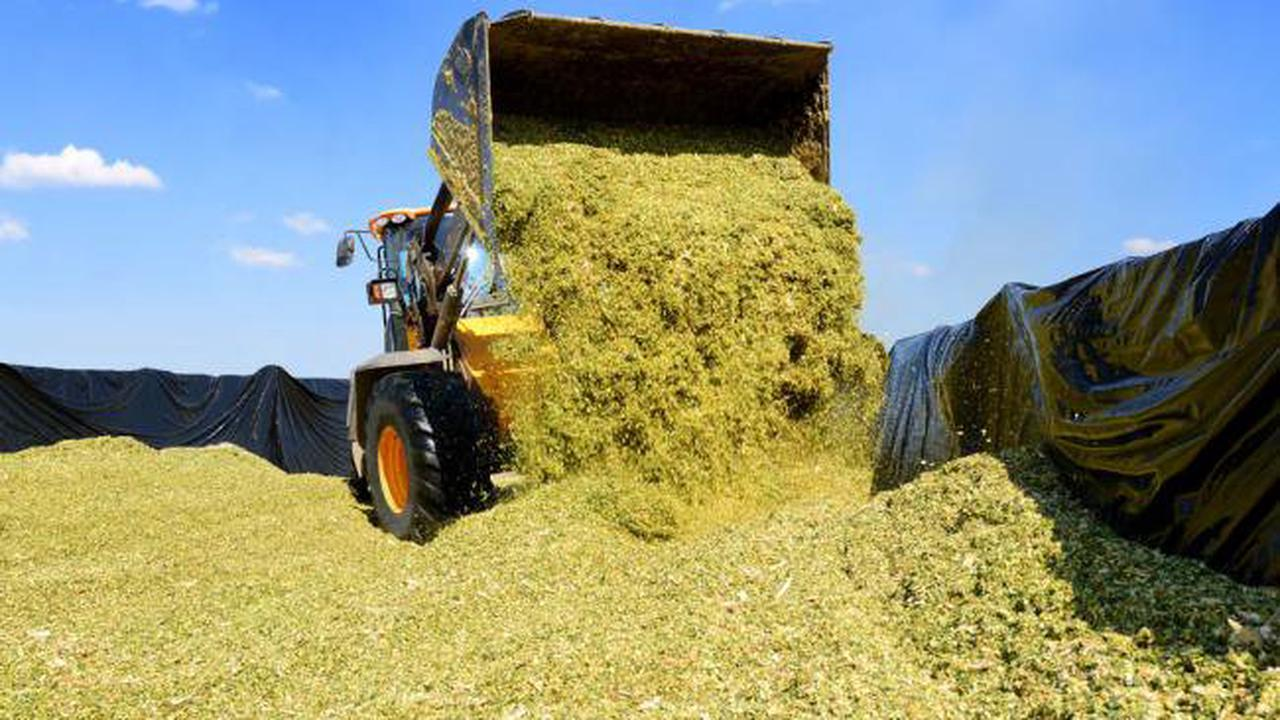 Farmers must be aware of what their insurance covers – Fitzmaurice