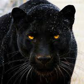 Meet The Real Black Panther