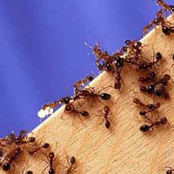 10 Natural Tips for Fighting Ants at Home
