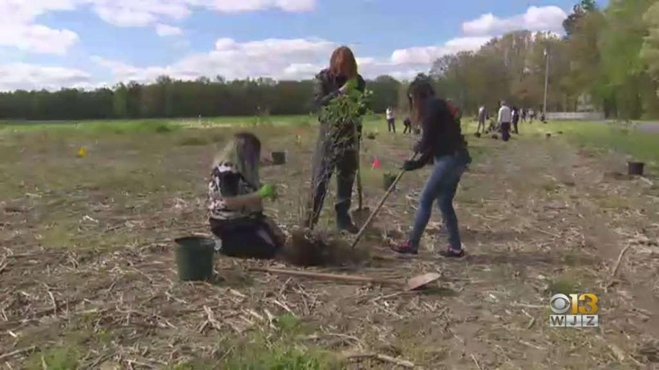 2,000 Trees Planted At Mount Pleasant Acres Farms On Earth Day