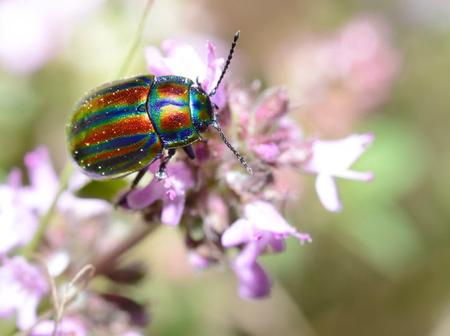 Here is why beetles are the most important organisms on the planet