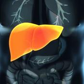 Steer clear from liver disease by curing hepatitis b naturally