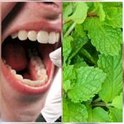 Do You Have Mouth Odour or Bad Breath? Try Mint Leaf