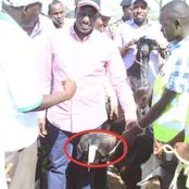 Flashback, The day Dr William Ruto spent Ksh 10million in a Baringo goat Auction