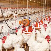Wonderful Ways of Increasing Eggs Production During Cold Season in Poultry