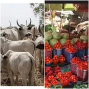 Opinion: Southern Nigeria Might Witness Increased Food Prices As Cattle Dealers Go On Strike.