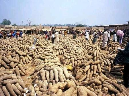 All you need to know about Zaki Biam yam market, the current prices of yam and business opportunity.