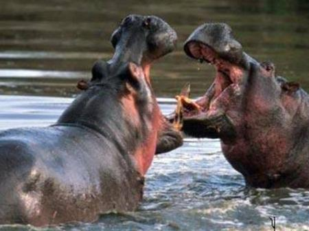 The Sad State Of Kisumu's Hippo Point