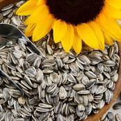 Did You Know Sunflower Seeds Can Prevent Cancer?