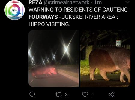 See why Mzanzi Is slowly turning in to Jumanji day by day