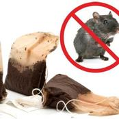 With Just One Tea Bag You'll Never See Mice, Spiders, or Ants Again