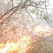 Fire Outbreak At The Nakuru National Park