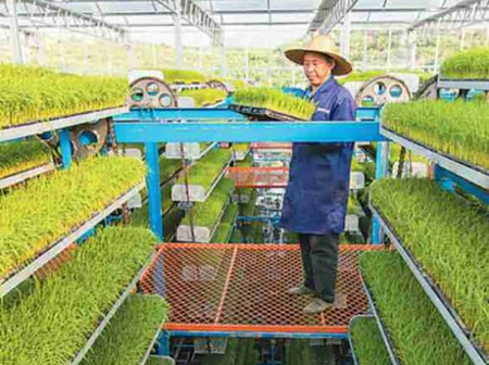 Check Out What Modern Farms Look Like In China (Photos)