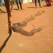 Big snake caught playing with a 2 years old baby