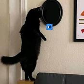 Fait insolite : un homme abandonne sa maison après avoir vu son chat noir se tenir devant son miroir