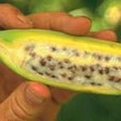 شاهد بالصور كيف كان شكل الفواكه و الخضروات و النباتات قبل التعديل الوراثي!! ستندهش..