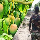 Nigerians condemn soldier who tortured a 10-year-old boy to death for plucking mangoes in barracks