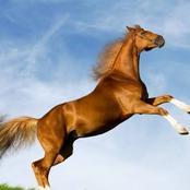 لماذا يتم قتل الحصان عندما تنكسر ساقه ؟... والإجابة إنسانية