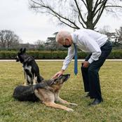 What Will Happen to Joe Biden's Dog a Month After Biting Incidence in White House