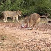 Burkina Faso : le parc animalier de Zinaré rouvre ses portes après sa réhabilitation