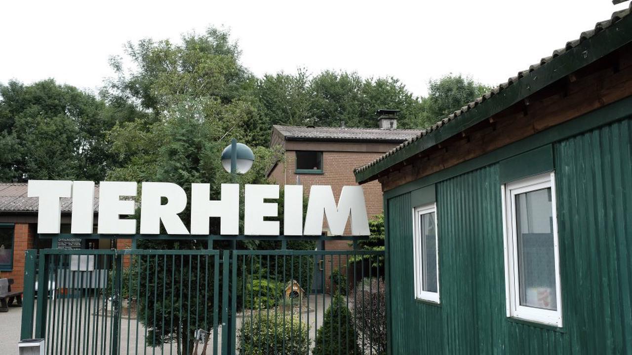 Hund in Bochum: Zwei Hunde freuen sich riesig, als sie sich im Tierheim wiedererkennen