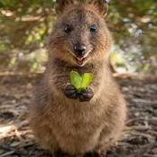 À la découverte de l'animal le plus heureux du monde