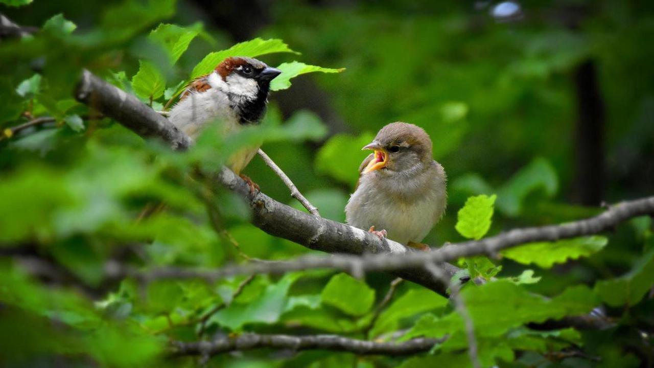 Jardiner pour la biodiversité avec Votre zone