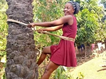 Check Out Why It Is An Abomination For A Woman To Climb Palm Tree In Igbo Land