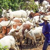 Opinion: Evicted Herdsmen Should Return To Oyo And Ogun, Here Is What Should Be Done To Ensure Peace