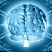 المخ تمتلكه جميع الكائنات ولكن ميز الله الإنسان بالعقل..فما الفرق بين