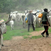 Trending News: Jonathan Flags Down Intentions Of Running for 2023 Election; Fulani Returns to Igangan