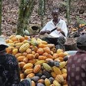 Economie : voici la solution à la fuite des produits agricoles vers les pays voisins