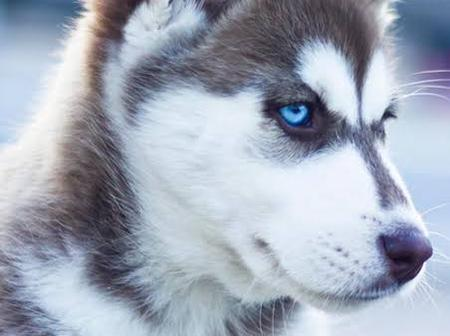 Adorable Dog Breeds You will Wish to Have.