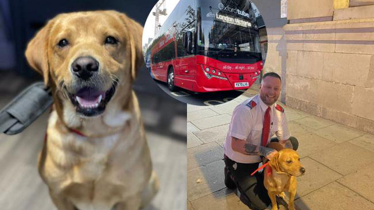 Oxford Tube driver saves escaped dog from the fast lane of the M40