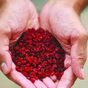 إنسولين طبيعي.. هذا هو افضل عشب لمرضى السكري.. له تأثيرات فعالة تعرف عليها