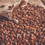 How To Start Coffee Beans Farming Business In Nigeria