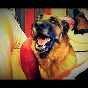 Horreur/Un chien de race enragé dévore une fille à Marcory