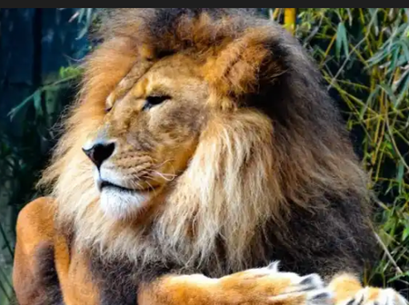 Declare This Prayer With Passion Tonight For Lion Of Judah To Intervene In Your Matters