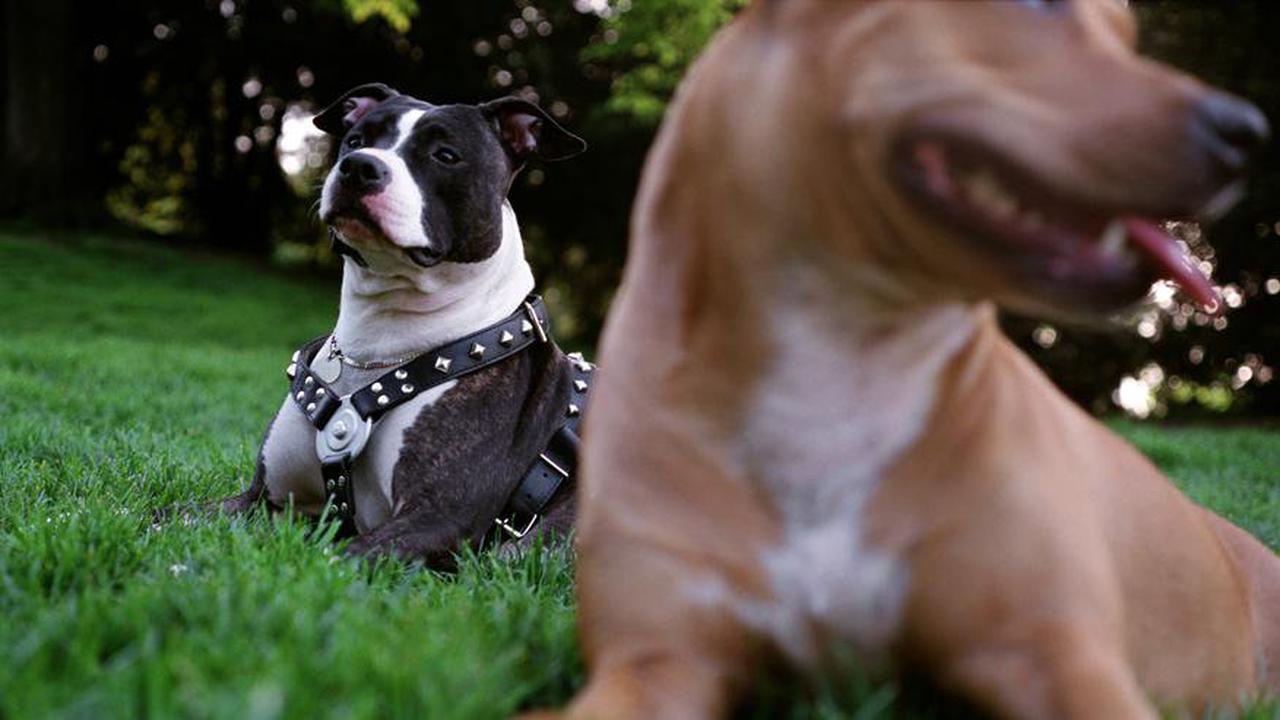 Birmingham: Hund soll 21-Jähriger mit psychischen Problemen helfen - doch er beißt sie tot