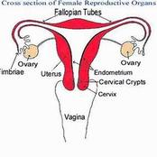All that a woman needs to know about her menstrual flow