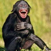 Ever Wondered If Animals Laugh?  See Pictures Of Animals Laughing That Will Make You Laugh