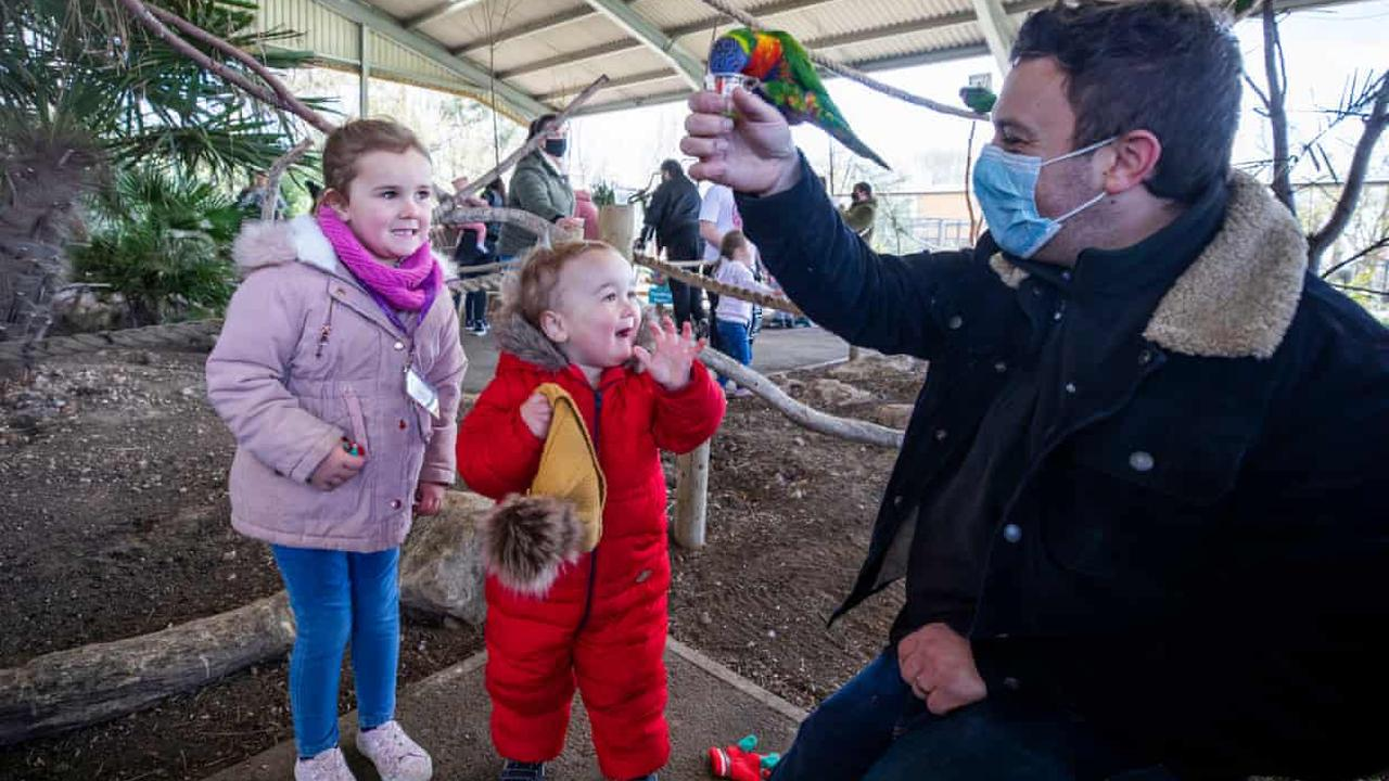 'It's like a celebration' for the animals and staff as Twycross zoo reopens