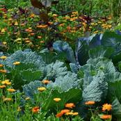 10 Sustainable Agriculture Methods and Farming Practices