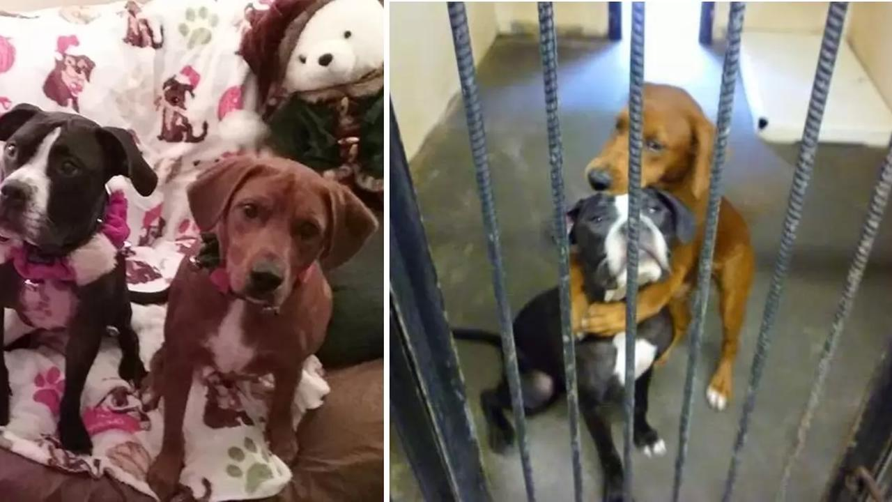 Shelter dog hugs best friend hours before being put down and saves their lives