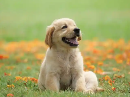 The 8 cutest dog breeds that can keep your company.