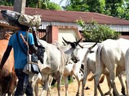 Herdsmen Cut Retired Principal's Hand In Fresh Attack In Igangan Community