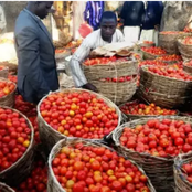 Man Laments The New Price Of Tomatoes In The North, Saying It Used To Be N800 But Now It's Just N150